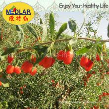 Medlar Lbp Effective Food Red Dried Goji Lycium