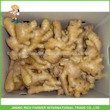 Légumes frais Gingembre chinois