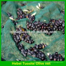récolter le filet d'olive