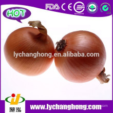 Yellow Onion Exporters in China