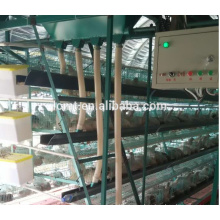 High Quality Cages For Chicken Shed