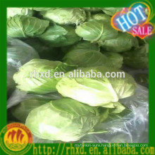 2015 Chinese new crop round cabbage/Lettuce/Iceberg