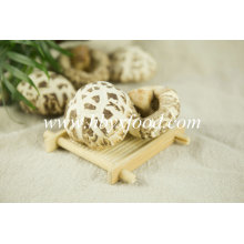 Desidratado, flor, cogumelo shiitake, secado, vegetal