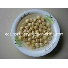 Canned Whole Mushroom Best Price (HACCP, ISO, BRC, KOSHER, HALAL)