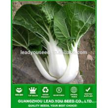 NCC01 Xuema OP quality chinese cabbage seed, baicai seeds