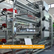 Nuevo diseño y gallinero de pollitas de bajo precio en el mercado de África