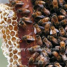 Miel salvaje de la flor del longan