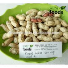 Chinese Shandong Origin Peanut In Shell 9/11