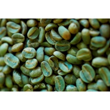 Green Coffee Bean estrae polvere di acido clorogenico