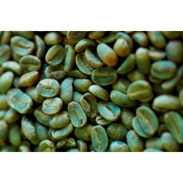 Green Coffee Bean Extract Powder Acid Chlorogenic