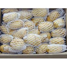 2016 Récolte de pommes de terre fraîches avec Lowes Price
