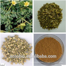 100% Pure Natural Good Quality Tribulus Terrestris Extract Powder for Sex medicine sexual performance enhancer