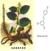 Giant knotweed extract 20%-98%Resveratrol