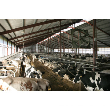 Cow Feeding Arena, Livestock Shed (PCH-15254)