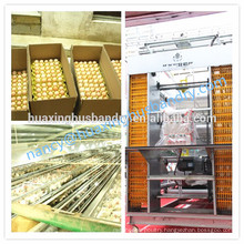 china manufacturer for the galvanize chick cage chicken cage
