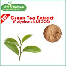 Poudre d'extrait de thé vert naturel