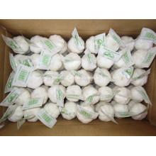 Alho branco puro embalado em caixa de 10 kg