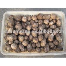 top chinese fresh big taro root 70g