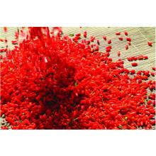 Organic Ningxia Goji China Wolfberry Natural Dried Organic Goji Berries OEM Mini Package Goji