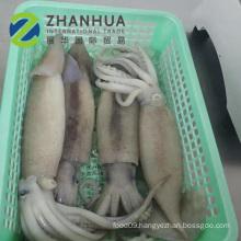 Frozen fish squid whole calamari illex squid