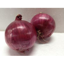 2016 Crop Fresh Red Onion in 20 Kg Mesh Bag with Cheap Price