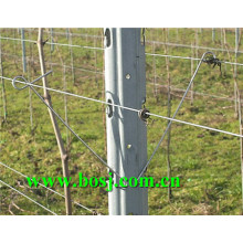 Vineyard Metal Trellis Post Roll Forming Equipment Supplier Australie