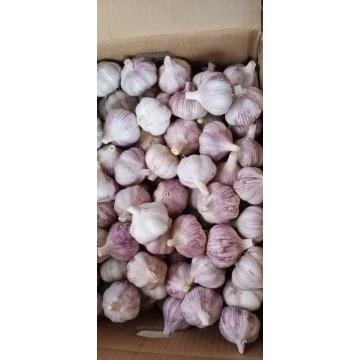 2021 Natural Garlic Price New crop Hot sales