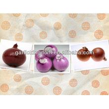 Vender 2013 nuevo cultivo rojo Cebolla