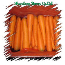 Fresh Vegetables Fresh Carrots S/M/L/2L
