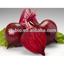 Pó de raiz de beterraba vermelha orgânica