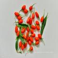 Approvisionnement d'usine naturel wolfberry organique séché / goji berry