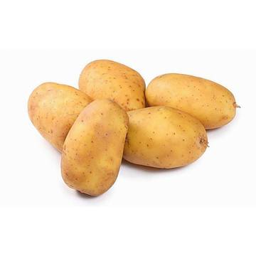 Yellow big Fresh Holland potato with good taste