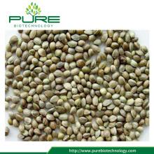 Healthy Hemp Seeds Unshelled
