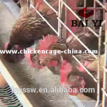 Large Scale Chicken Farm Chicken Cages For Layer Rearing