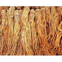 Extracto de angélica china 100% natural