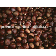 China chestnut for 2012 happy new year