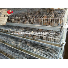 Cages grillagées Cage Cage cages batterie cages
