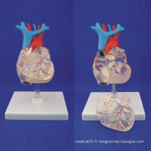 Modèle d'enseignement médical anatomique du cœur humain de haute qualité (R120108)