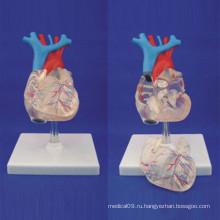Высококачественная модель анатомического медицинского обучения сердца человека (R120108)