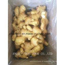 Anqiu High Quality Ginger for Middle East