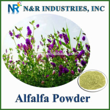 Pure and straight Alfalfa Grass Juice Powder