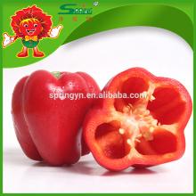 Pimienta roja y verde amarilla fresca pimientas cultivadas orgánicas de la cereza