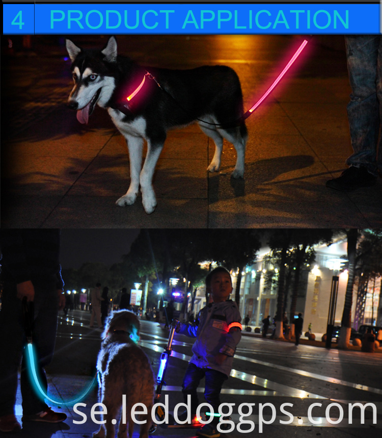 Dog With Light Up Lead