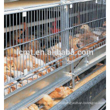 high quality poultry layer cages dimension for 10000 chicken