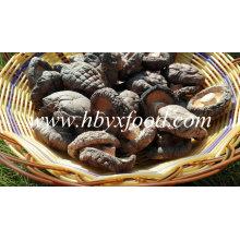 4-5cm Grade un champignon Shiitake lisse sans tige