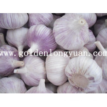 New Crop Red Garlic for Brazil Market