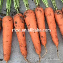 Healthy and sanitary dehydrated carrots slice from China