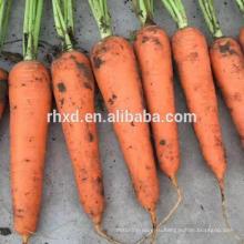 Здоровые и санитарно-техническим обезвоженная морковь нарезать из Китая