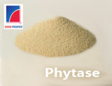 Phytase/ Phytase Powder from Qingdao GoodProsper