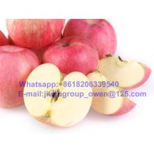 Fresh Fruit Shandong Origin New Crop FUJI Apple